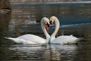Английские традиции. День Святого Валентина в Англии
